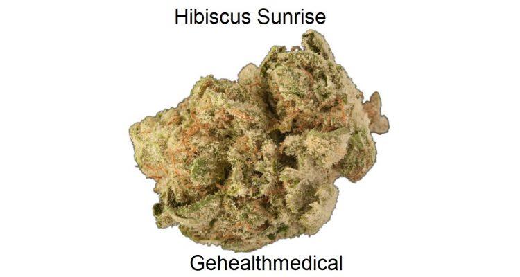 Hibiscus Sunrise