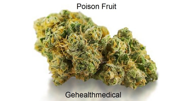 Poison Fruit